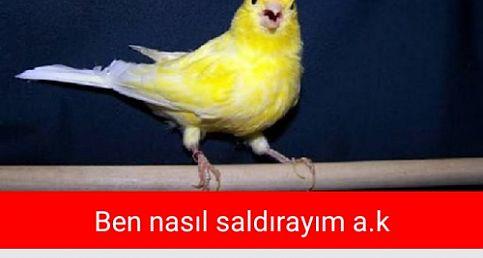 Fenerbahçe Kayserispor'a yenildi capsler patladı