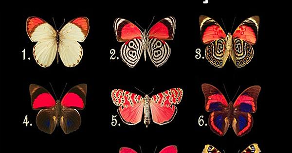 Bir Kelebek Seçin Ve Bilinçaltınızda Yatan Bilinmezlikleri Keşfedin