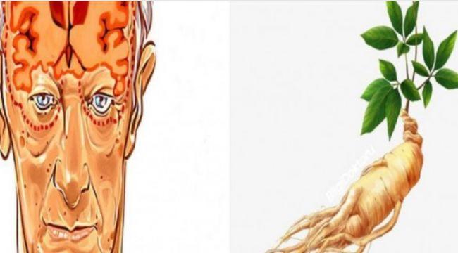 Alzheimer,Depresyon ve Kaygıya Karşı Kullanılan Bitki