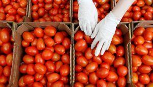 Rusya 60 ton domatesi iade etti