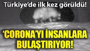 Türkiye'de ilk kez görüntülendi! 'Covid-19'u insana geçiren tür olabilir'